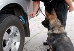rendőrségi kutya