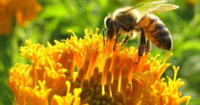 Szigorú határidőre figyelmeztetik a méhészeket