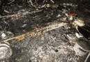 Egy ember bennégett a kigyulladt lakókocsiban